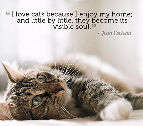 08-cat-love-quote.jpg