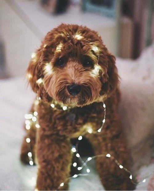 december-snow-gift-Favim.com-6577702.jpg