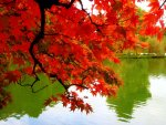 223231987_free-pictures-fall-autumn-colors-leaves-Mexicanwave.jpg