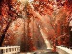 lark-linen_we-heart-it_smell-of-autumn.jpg