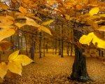 Yellow-Leaves-autumn-393324_1280_1024.jpg