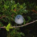 Angry_Bird_3.jpg